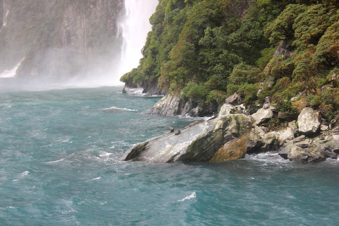 Nuova Zelanda Milford Sound Conosco Un Posto