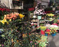 10 bellissimi fioristi a Milano per mazzi, bouquet e piante